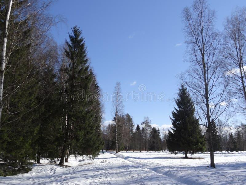 Pavlovsk park Pavlovsk St Petersburg Rosja obrazy royalty free