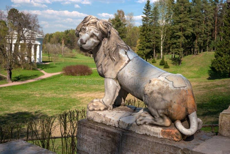 Pavlovsk, Rusland - Mei 6, 2016: Oud marmeren leeuwbeeldhouwwerk in Pavlovsk paleispark royalty-vrije stock foto