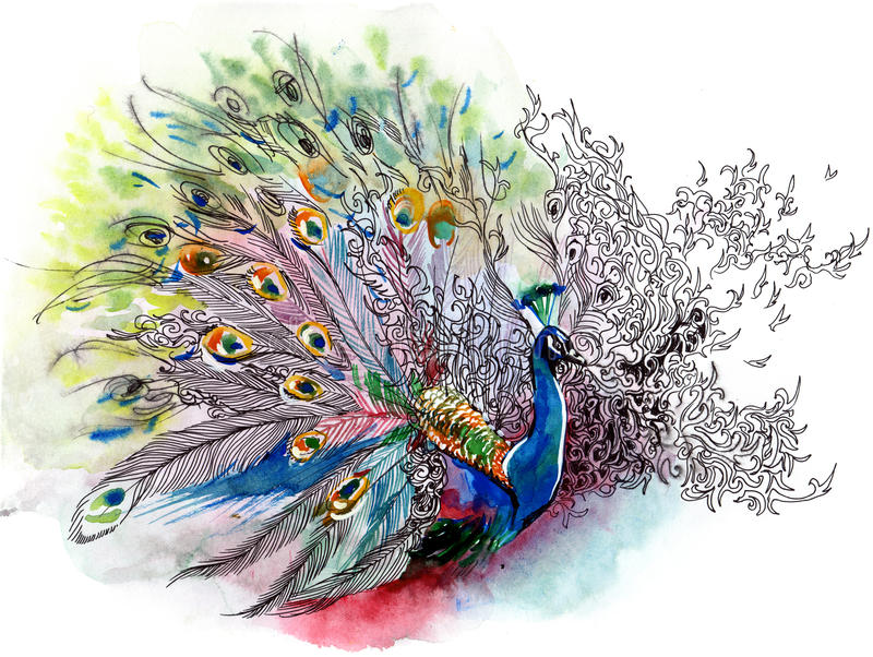 Pavo real libre illustration