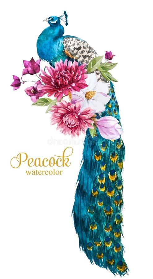 Pavo real de la acuarela con las flores ilustración del vector