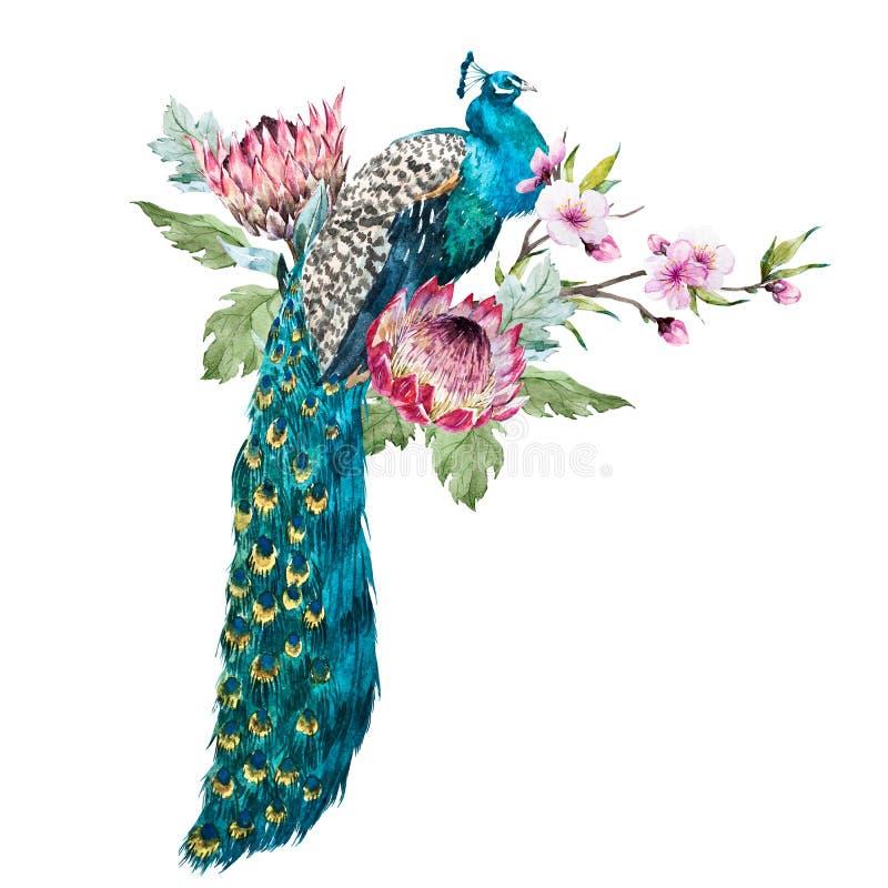 Pavo real de la acuarela con las flores stock de ilustración