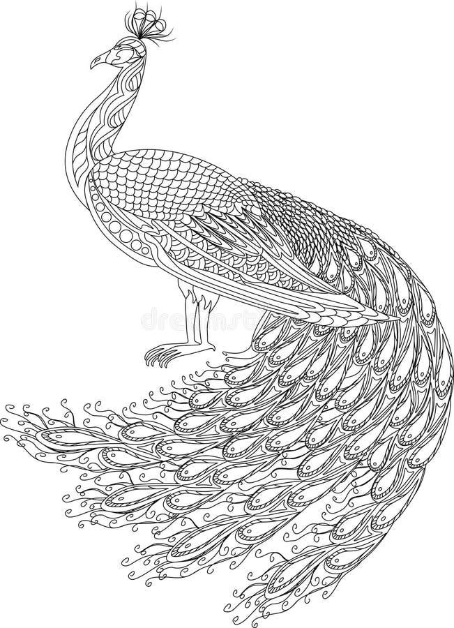 Pavo real dibujado mano para la página anti del colorante de la tensión con los altos detalles, aislado en el fondo blanco imagen de archivo
