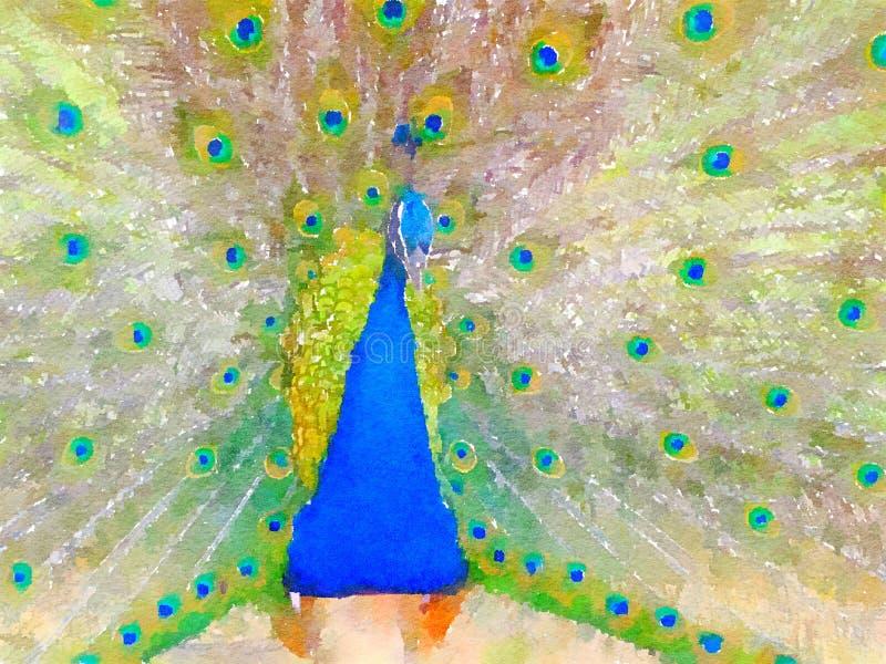 Pavo real en acuarela con las plumas extendidas fotos de archivo libres de regalías