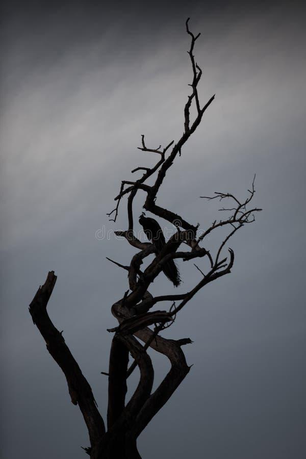 Pavo real en un árbol foto de archivo libre de regalías