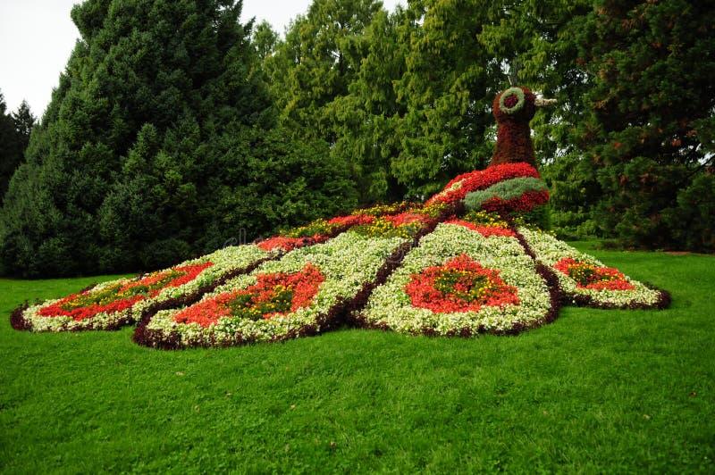 Pavo real floral de Mainau II imagen de archivo libre de regalías