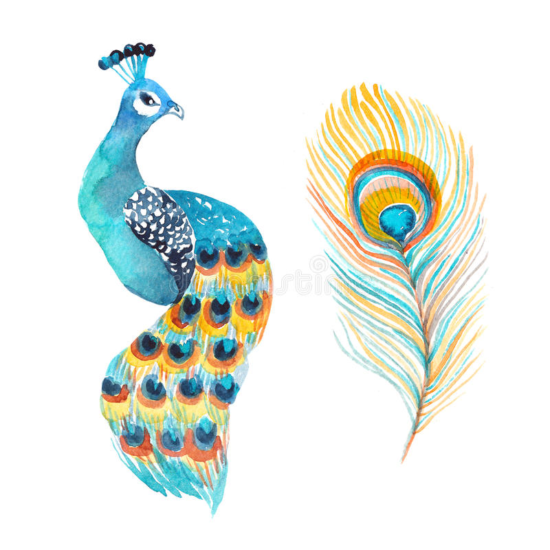 Pavo real y pluma de la acuarela aislados en el blanco stock de ilustración