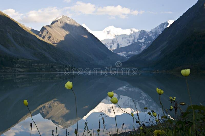 Pavot jaune au lac Ak-kem photo stock