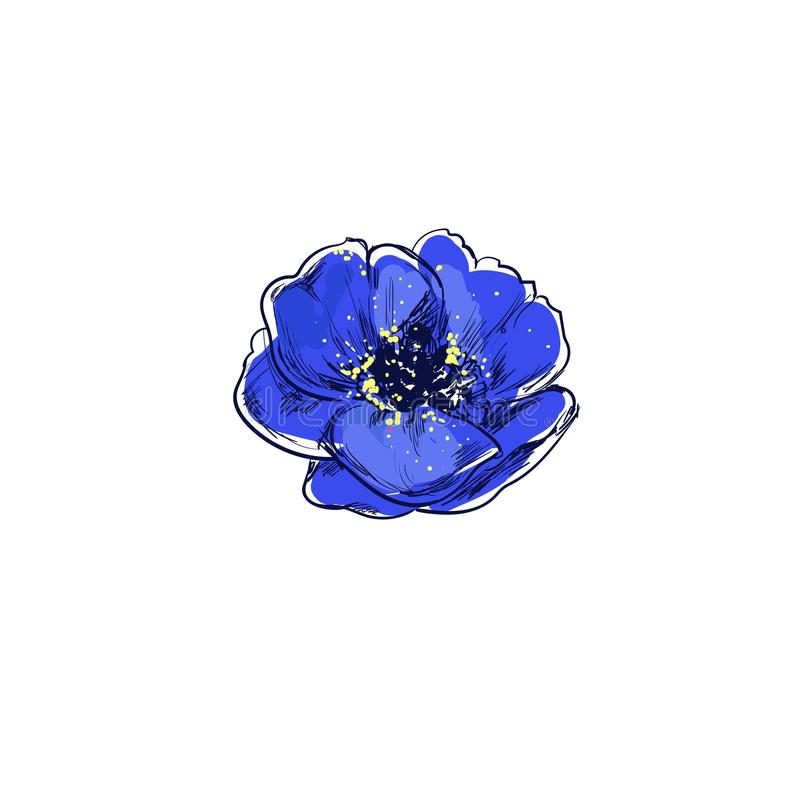 pavot La belle affiche tirée par la main du vecteur a isolé des herbes et fleurit des illustrations Collection médicale et organi illustration libre de droits