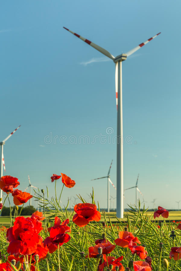 Download Pavot Sur Un Champ Devant Une Turbine De Vent Image stock - Image du fleur, bleu: 77161621
