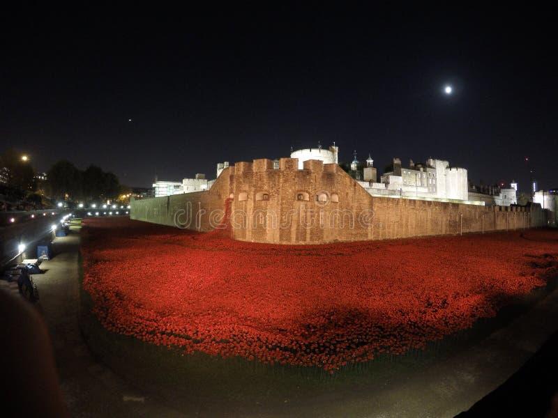 Pavots à la tour de Londres photographie stock libre de droits
