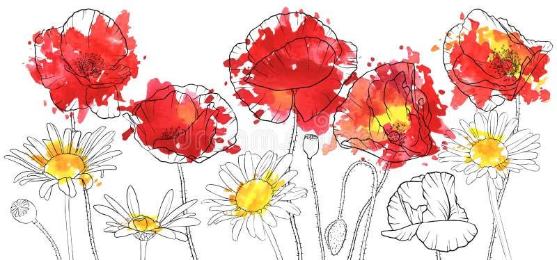 Pavots de dessin de vecteur et fleurs de marguerite illustration de vecteur
