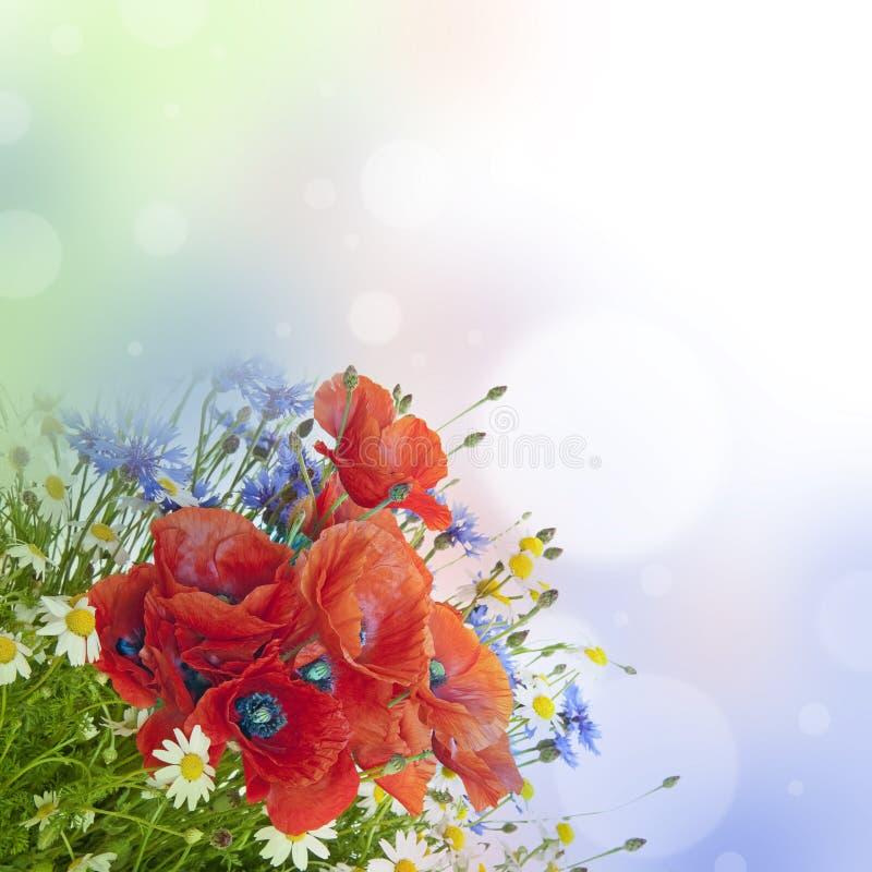 Pavots, marguerites, cornflowers dans le bouquet photo libre de droits