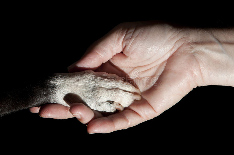 Paw and hand bond stock images