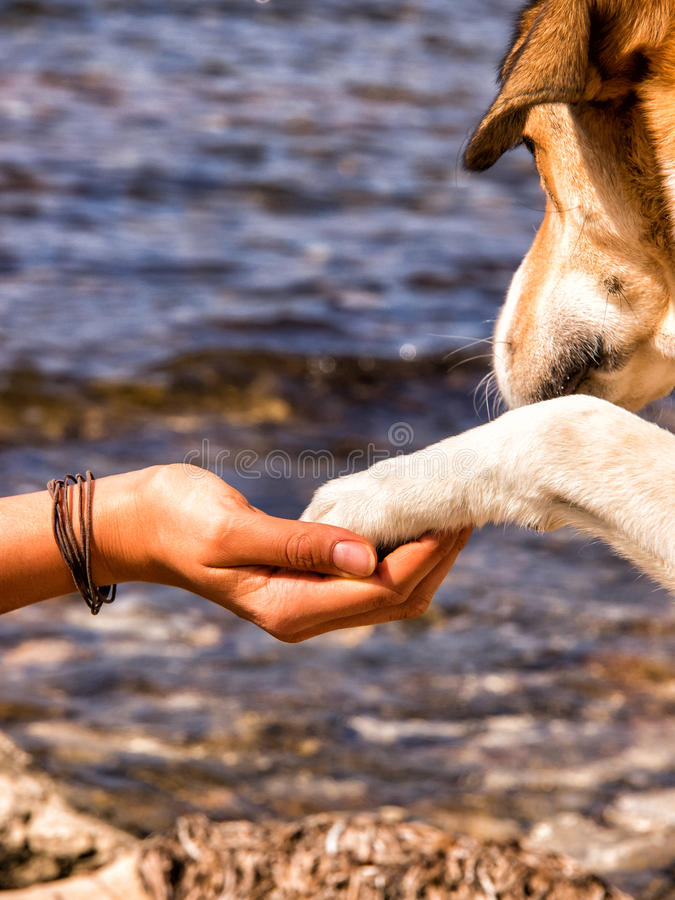 Paw in hand 35. Human hand and dog paw stock images