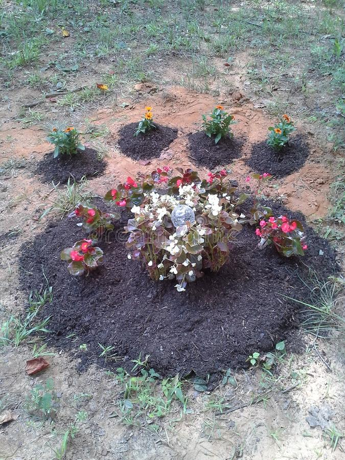 Paw print pet memorial garden plot. Dont, dog, cat, puppy, flowrrs, flowers, burial, grave, creative stock photography