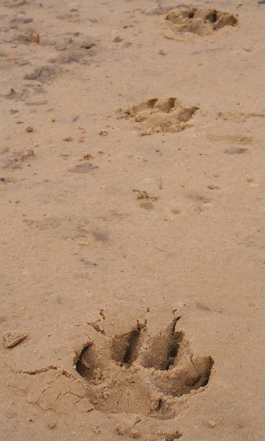 Download Paw Prints stock photo. Image of beach, footprints, prints - 179760