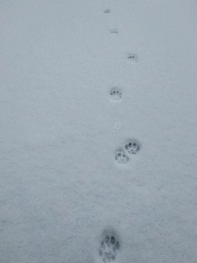 Paw Prints in the Snow stock image