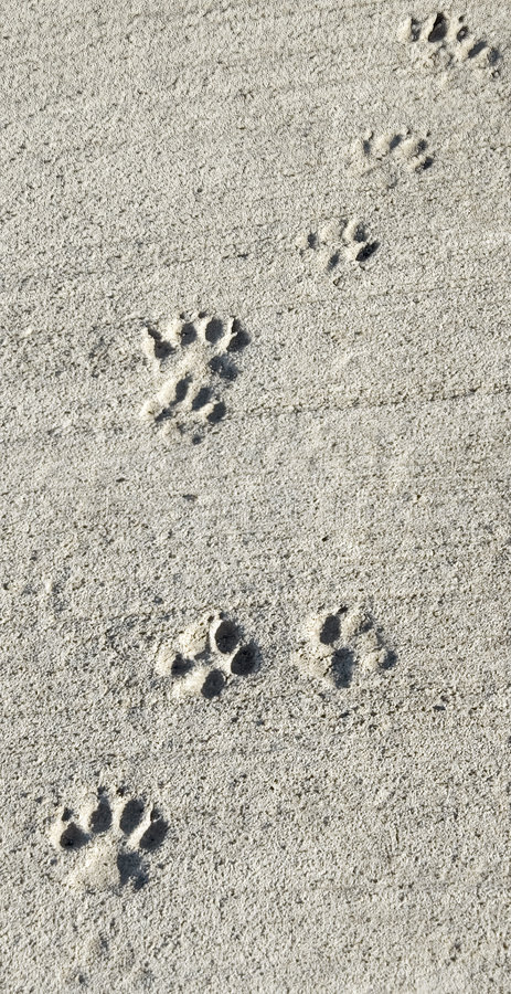 Paw prints in wet cement path