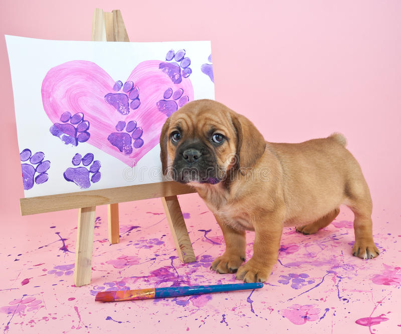 Paw Prints on Your Heart. Cute puppy standing with a painting of a heart with paw prints going through it stock photos
