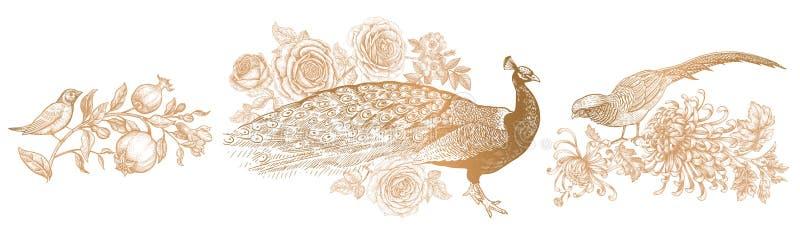 Paw, róże, bażant i chryzantemy, słowik ilustracji