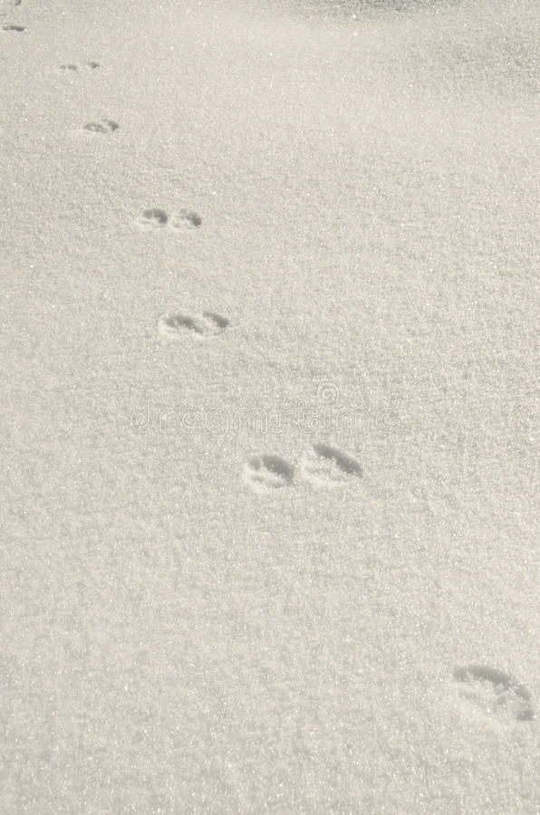 Download Paw on snow stock image. Image of white, winter, rabbit - 29330547