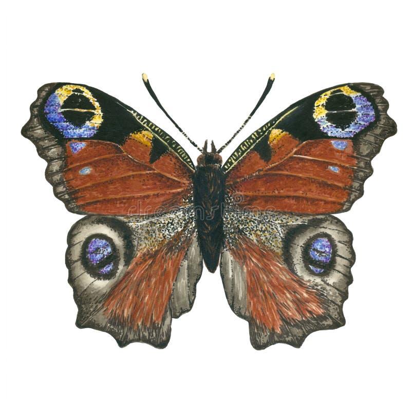 Pawi motyl ilustracja wektor