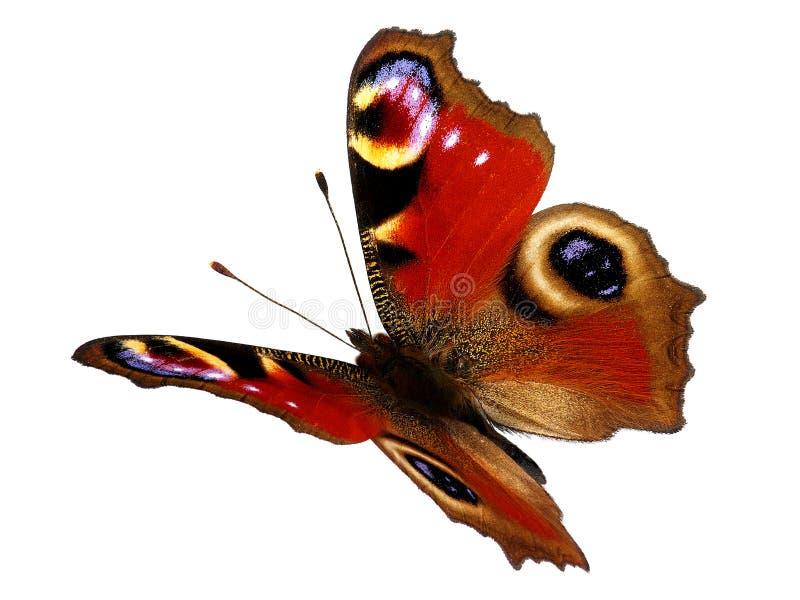 Pawi motyl w locie (Inachis io) obraz stock