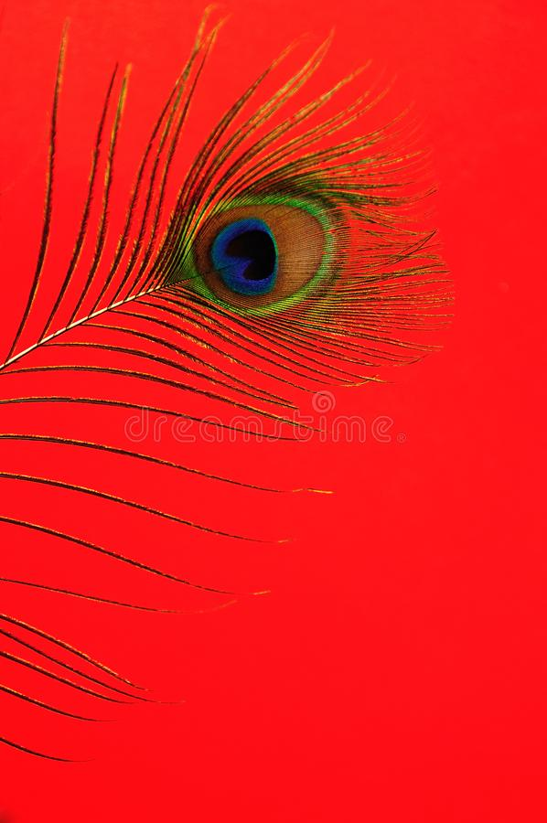 Pawi piórko obrazy stock