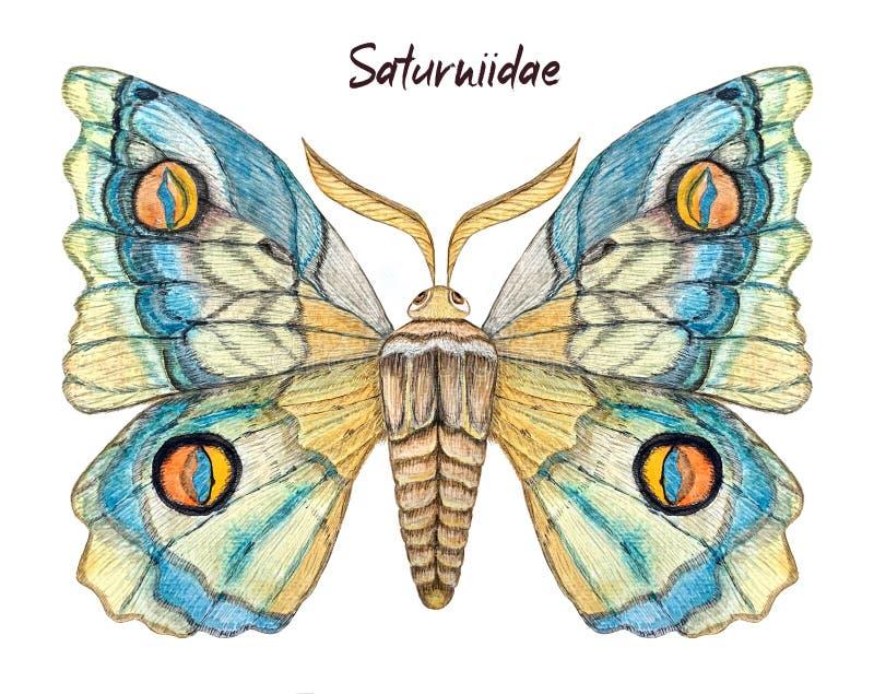 Pawiego motyla akwareli ilustracja ilustracja wektor