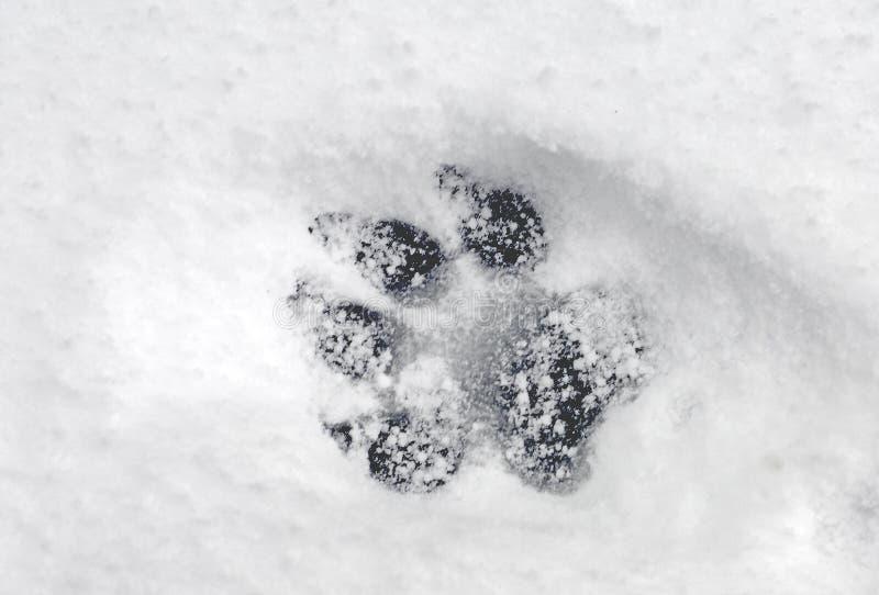Pawprint in Sneeuw royalty-vrije stock fotografie