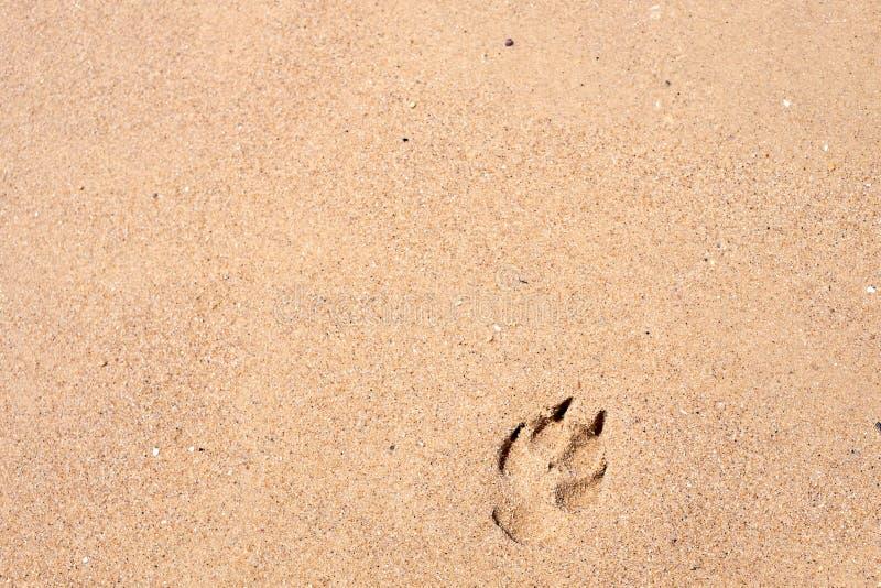 Pawprint sur le sable photographie stock libre de droits