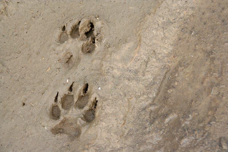 pawprints 库存图片