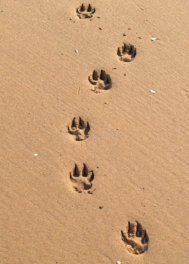 Free Pawprints Stock Photography - 3187942