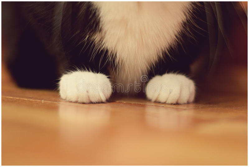 paws stock foto's