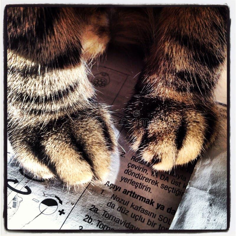 paws imagem de stock royalty free