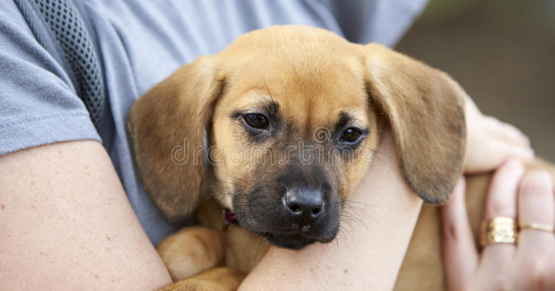 Paws 4 a Cause. Annual dog rescue, protection and adoption event in Cleveland, Ohio stock image