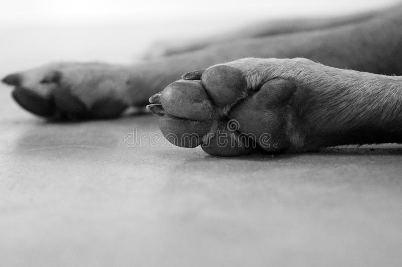 Paws. Of dogs stock photos