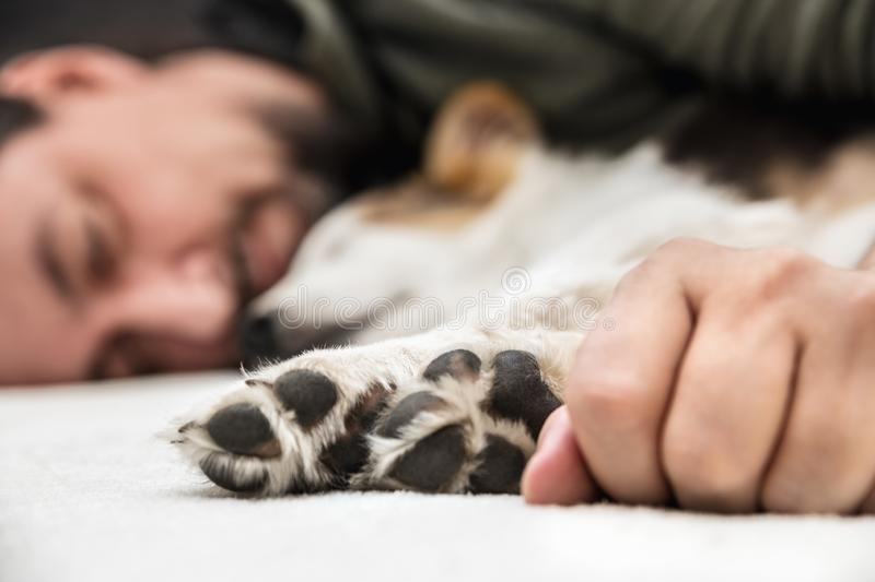 Paws from a puppy dog and male´s hand in the front, man and whelp relaxing. And sleeping together royalty free stock image