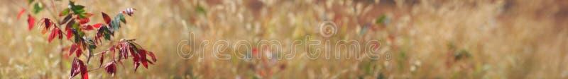 Pays d'automne panoramique photos stock