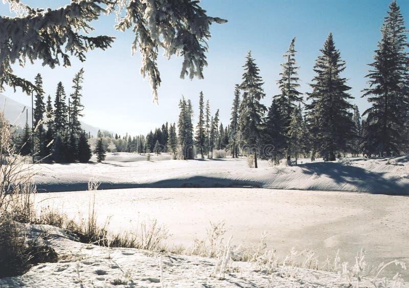 Download Pays de l'hiver photo stock. Image du ciel, arbres, outside - 73042