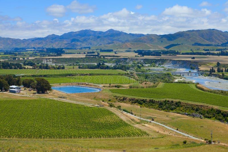 Pays de vin de la Nouvelle Zélande photos libres de droits