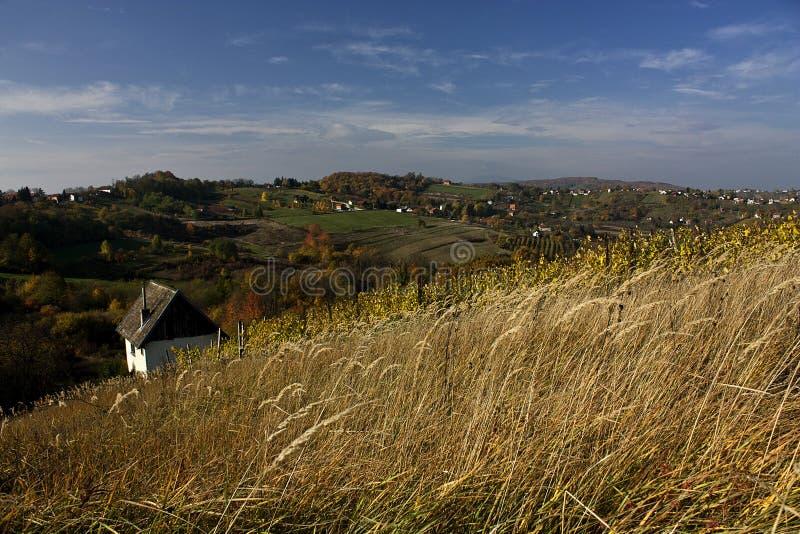 Pays de yard de vin photo libre de droits