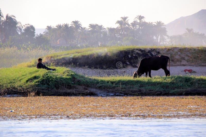 Paysage égyptien avec la vache et le garçon de repos sur la banque images libres de droits