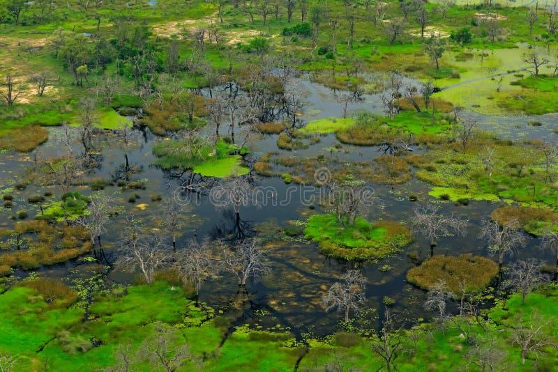 Paysage aérien dans le delta d'Okavango, Botswana Lacs et arbres morts dans l'eau, vue d'avion Végétation verte dans Afr du sud photos libres de droits