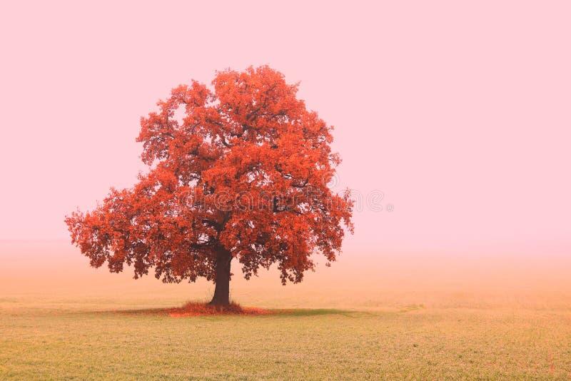 Paysage abstrait avec l'arbre peu commun solitaire parmi le champ dans la chute en brouillard photos stock