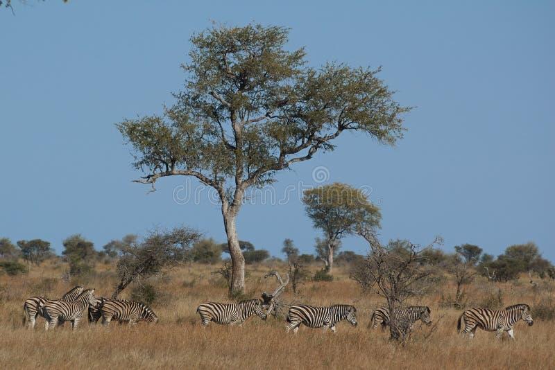 Paysage africain avec des animaux images stock