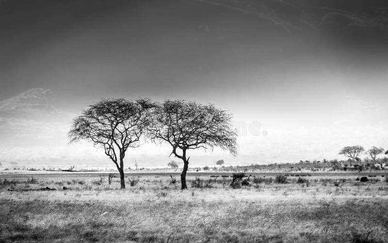 Paysage africain de plaines de la savane photographie stock