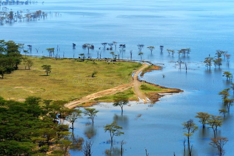 Paysage africain, vue de primevère farineuse sur le lac Nakuru image stock