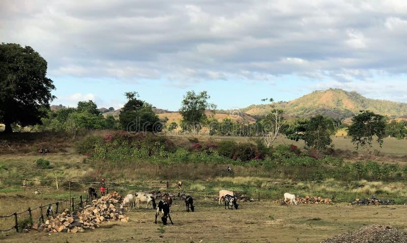 Paysage agricole africain avec des collines à l'arrière-plan photographie stock libre de droits