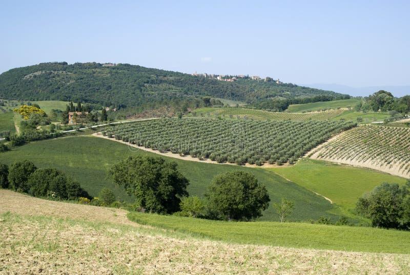Paysage agricole en Toscane images stock